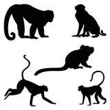 Monkey silhouette set isolated on white background. Monkey silhouette set different breeds vector illustration isolated on white background Royalty Free Stock Photos