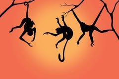 Monkey silhouettes on a sunrise background Stock Images