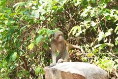 Monkey or simian sitting on a rock stock photo