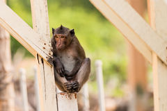 Monkey sit and wait. At people house Stock Image