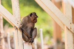 Monkey sit and wait. At people house Royalty Free Stock Photography