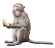 Monkey Sits And Eats Banana Royalty Free Stock Photos