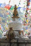 The monkey sits on a Buddhist Nepalese stupa royalty free stock image