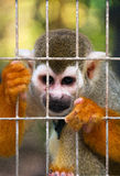 Monkey. The monkey sits in a cage in a zoo Royalty Free Stock Image