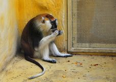 The monkey sits and eats in the cage stock photo