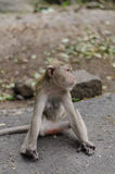 monkey sits on the rock Royalty Free Stock Photo