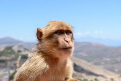 The monkey sits on the rocks and looks at someone royalty free stock image
