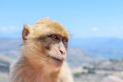 The monkey sits on the rocks and looks at someone stock images