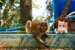 Monkey sits at Sambok Pagoda, Kratie, Cambodia stock photos