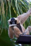 A monkey sits at the top of stares Stock Photography