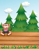 A monkey sitting above the empty wooden boards in front of the p Stock Photos