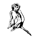 Monkey sitting - abstraction Royalty Free Stock Images