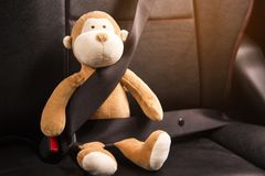 Monkey sitting belt in the car. stock image