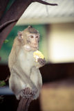 Monkey sitting on a branch Stock Photography