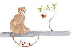 Monkey sitting on a branch. Stock Photography