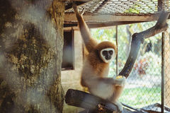 Monkey sitting in a cage zoo Royalty Free Stock Photo