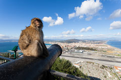 Monkey in Gibraltar. Monkey sitting on a canon up at the to of the Rock in Gibraltar Stock Photo