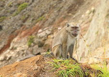 Monkey sitting on edge of crater on Kelimutu stock photography