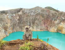 Monkey sitting on edge of crater with lake Tin on Kelimutu stock photo