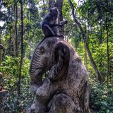 Monkey sitting on elephant Stock Photography