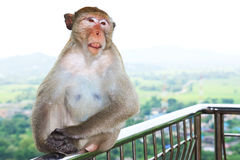 Monkey sitting on a fence Royalty Free Stock Photos