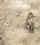 Monkey sitting on the floor. stock image