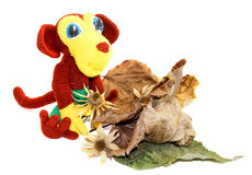 Monkey sitting in front of dry leaves and flowers Stock Image