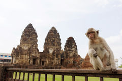 Monkey sitting in front of Wat Phra Prang Sam Yot temple, Lopburi, Thailand. Royalty Free Stock Photography
