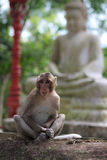 Monkey sitting on garden stone with statue of Buddha at background Royalty Free Stock Images