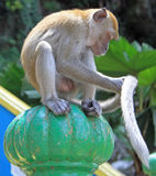 Monkey is sitting on green sphere, Batu caves Royalty Free Stock Photos
