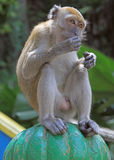 Monkey is sitting on green sphere, Batu caves Royalty Free Stock Photo