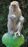Monkey is sitting on green sphere, Batu caves Stock Photos