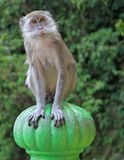 Monkey is sitting on green sphere, Batu caves Stock Photography