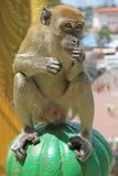 Monkey is sitting on green sphere, Batu caves Royalty Free Stock Photography