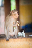 Monkey sitting on the ground and eats. ю Summer royalty free stock photography