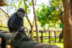 Monkey sitting and holding tail Stock Photo