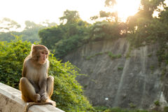 Monkey. A monkey sitting in the mountain Royalty Free Stock Photo