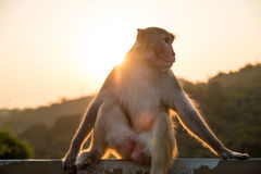 Monkey. A monkey sitting in the mountain Royalty Free Stock Images