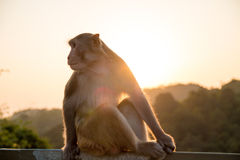Monkey. A monkey sitting in the mountain Stock Image