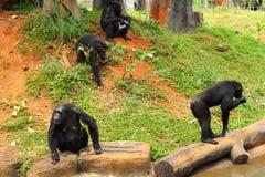 Monkey sitting at the nature Stock Photo