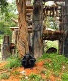 Monkey sitting at the nature Royalty Free Stock Image