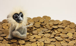 Monkey is sitting on a pile of gold coins.  Royalty Free Stock Images