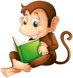 A monkey sitting while reading a book. Illustration of a monkey sitting while reading a book on a white background Stock Image
