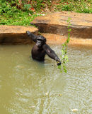 Monkey sitting on the river. Royalty Free Stock Photography