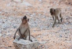 Monkey sitting on the rock watching sea Stock Image