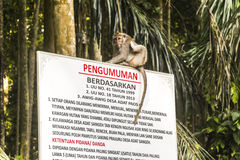 Monkey sitting on sign in Bali Royalty Free Stock Photography