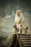 Monkey sitting Stock Image