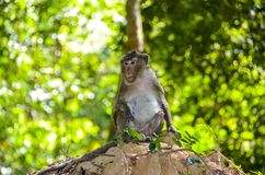 Monkey sitting on small hill stock images