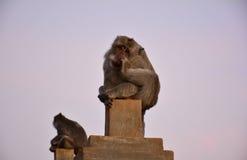 Monkey. Sitting on the stack at Uluwatu Temple Stock Photo