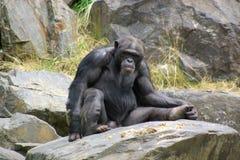 Monkey sitting on stone stock photo